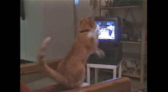 Boxing cat - YouTube (1)