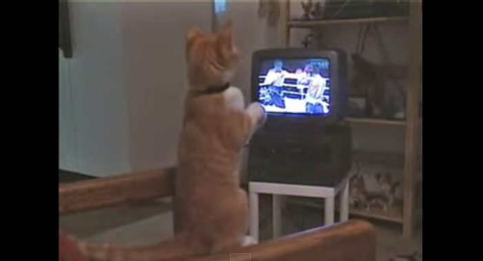 Boxing cat - YouTube (2)