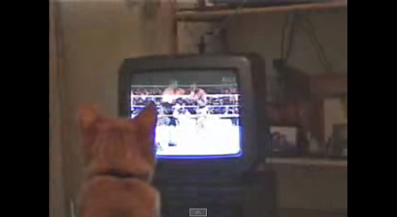 Boxing cat - YouTube