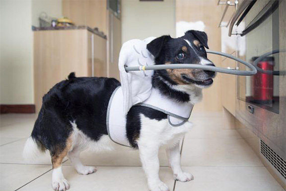 blind-dog-safety-device-muffins-halo-7