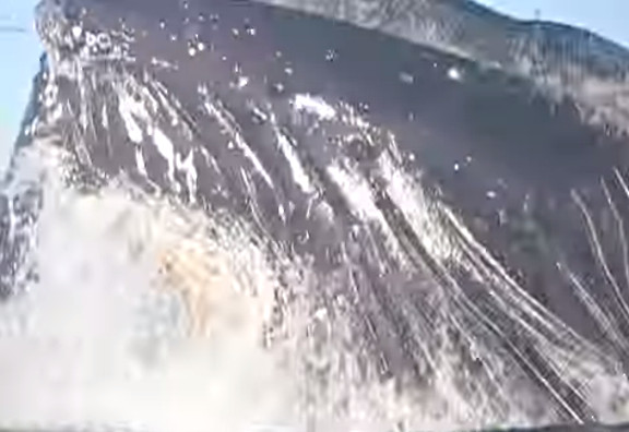 Surfer Almost Swallowed by Whale - YouTube (2)