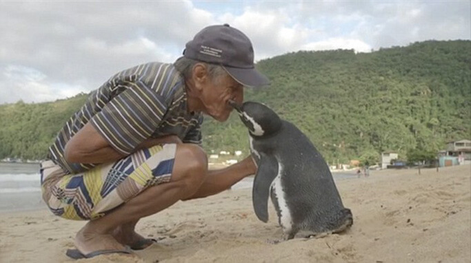 man-saves-penguin-returns-swims-5000-miles-18 (1)
