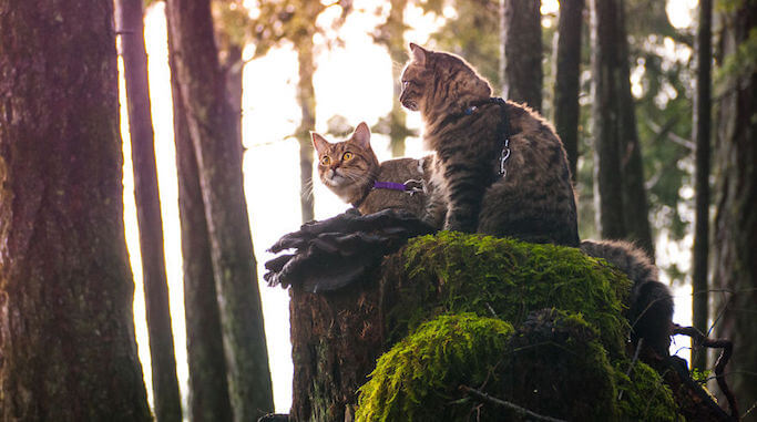 these-kittens-were-abandoned-but-now-go-on-epic-adventures-with-us-11__880