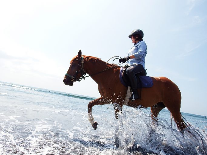 horsetrekking01