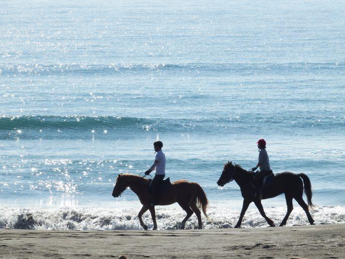 horsetrekking04