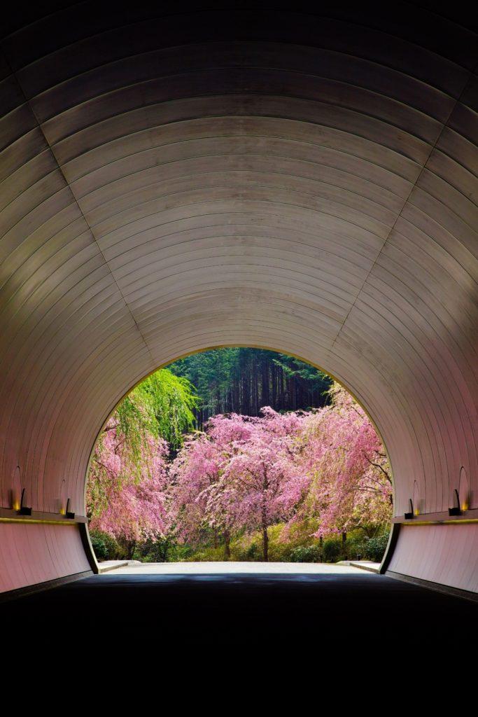 03 桜色に染まるトンネル