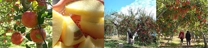 季節によって様々なフルーツ狩りが楽しめる「松井農園」釣り堀やバーベキュー場も完備する観光スポット!