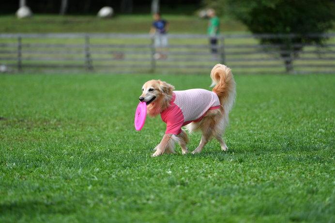 広〜い公園内のドッグランで、のびのび走らせてあげましょう!(イメージ画像)