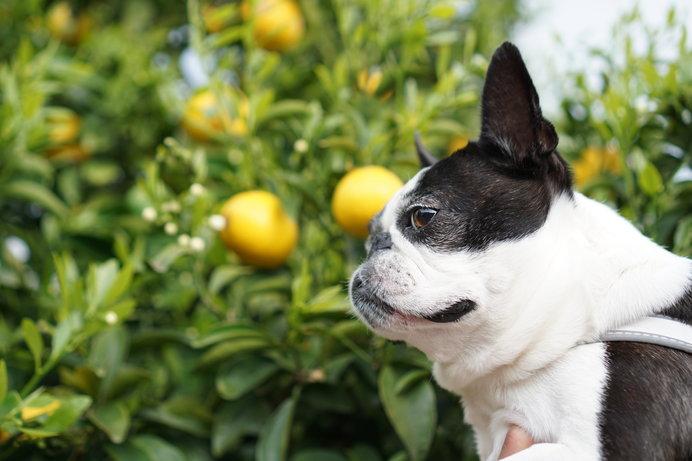 愛犬と一緒に一日のんびり過ごせる松本農園(イメージ画像)
