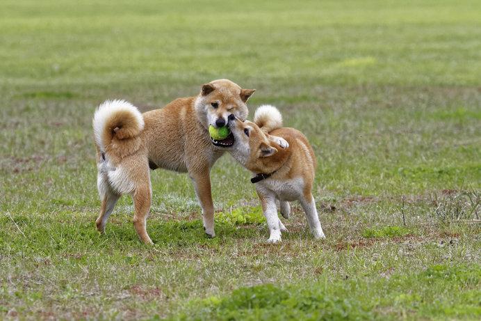 ドッグランも「休憩エリア」「フリーエリア」小型犬エリア」と大充実!(イメージ画像)